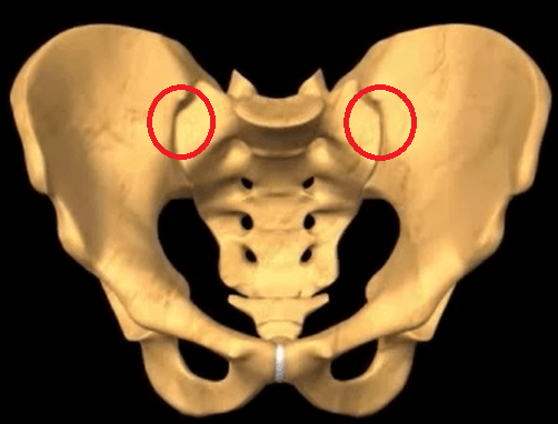 SI Joints circled