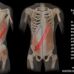 Front & Back Muscle Slings Function Together