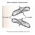 Sacral Movement Induced by Innominates